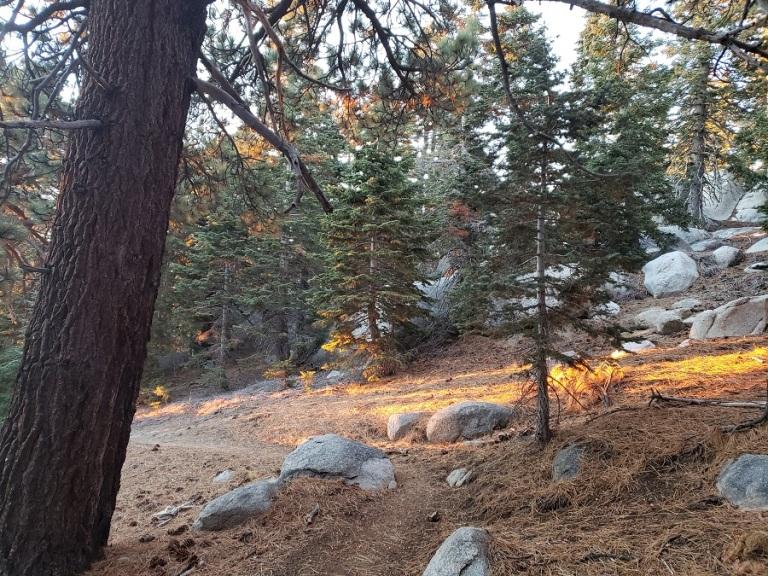 Marion Mountain Trail, San Jacinto Mountains, CA