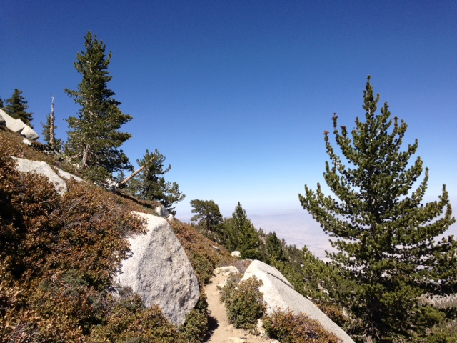 Pines and desert view on the trail between Wellman Divide and Miller Peak