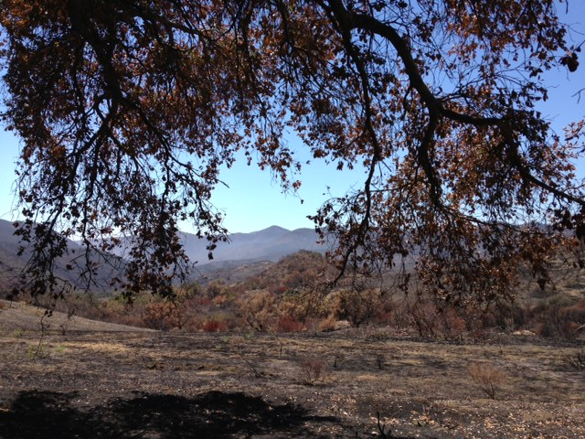 Shade from an oak on the Serrano Road Trail