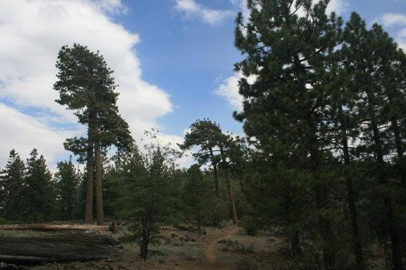 Pine flat on the Pacific Crest Trail to Delamar Mountain