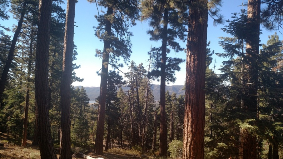 Skyline Trail, Big Bear Lake, CA