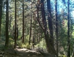 Fall Line Trail, Big Bear lake CA