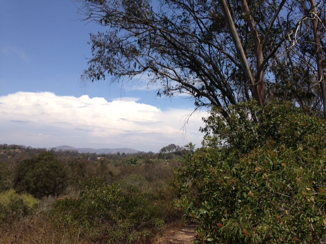 On the trail at San Dieguito County Park