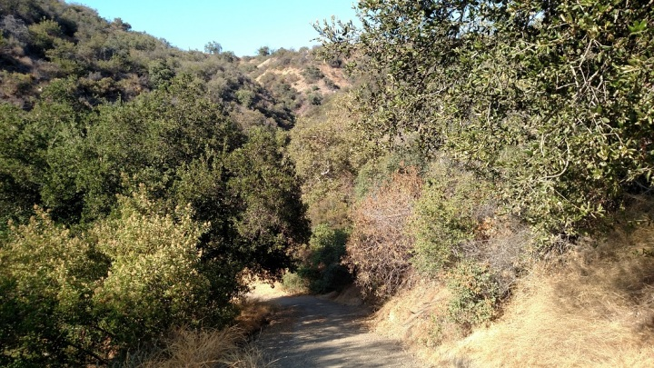 Hollyhock Trail, Los Angeles, CA