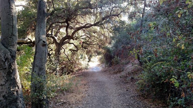 Hollyhock Trail, Los Angeles