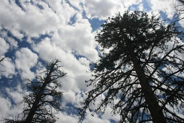 Pines and clouds on the slope of Vetter Mountain