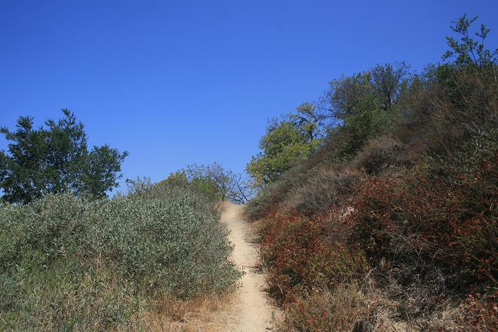 Ascending the Schabarum Trail to Buzzard Peak