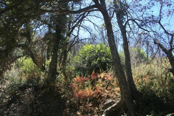 Woodland on the Gabrielino Trail