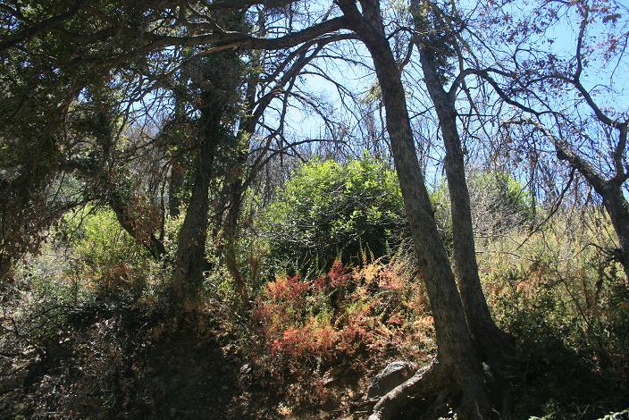Woodland on the Gabrielino Trail