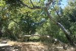 0:35 - Grove of sycamores on the Los Penasquitos Trail