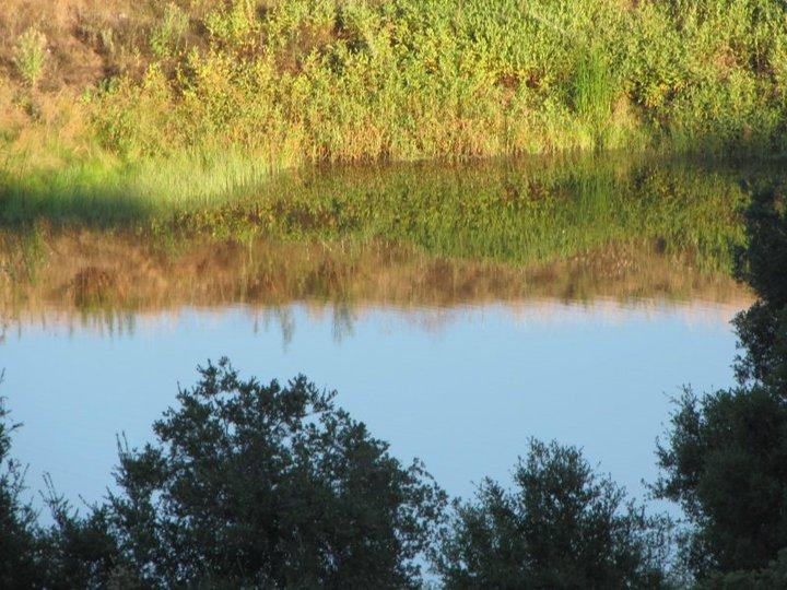 Pond at Rocky Oaks Park, Santa Monica Mountains, Malibu, CA
