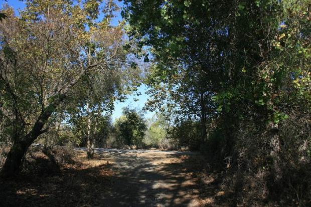 Shade trees in Mason Regional Park