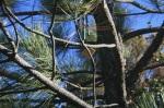 1:00 - Windchimes on a pine