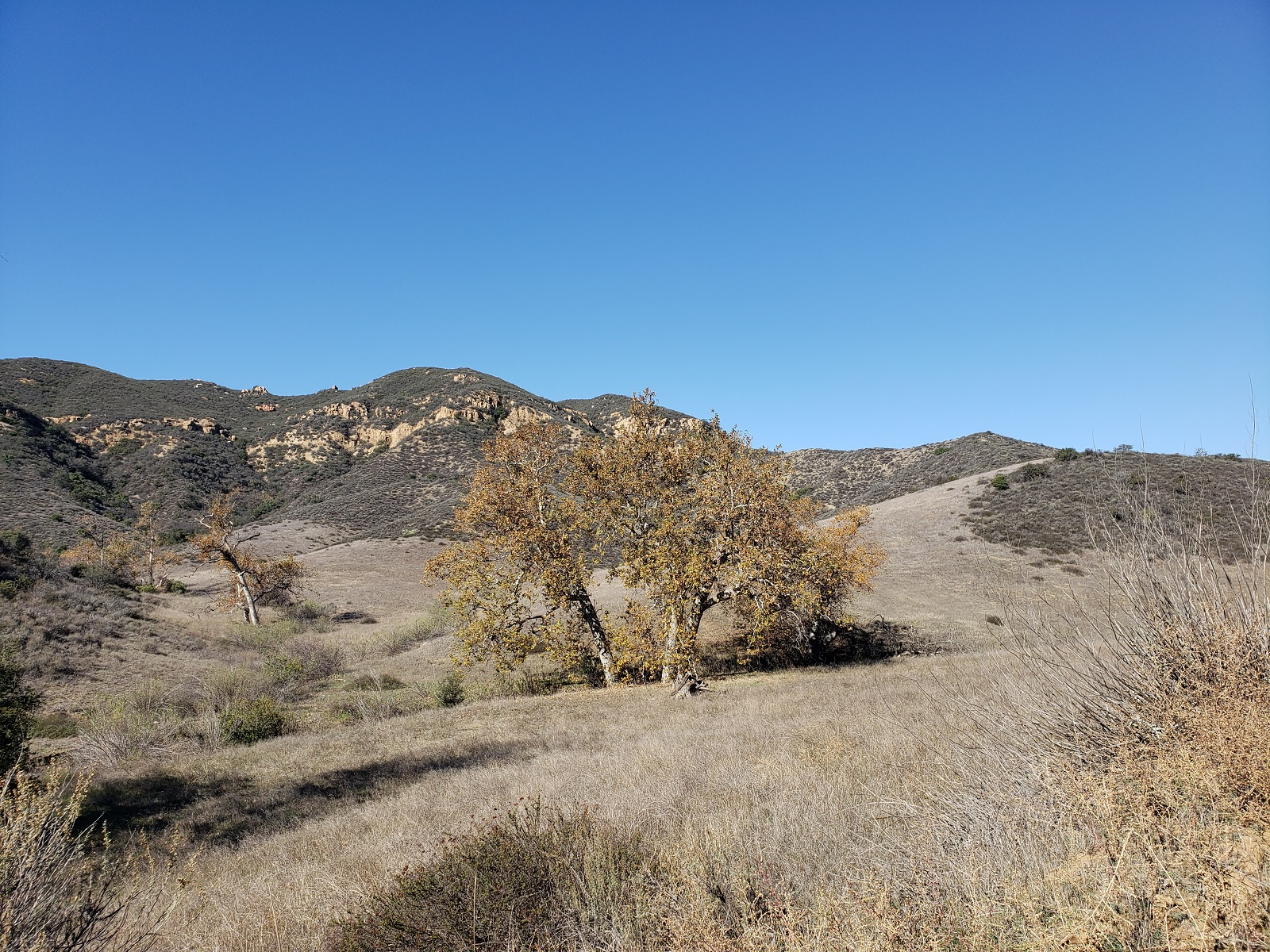 Upper Black Star Canyon, Orange County, CA