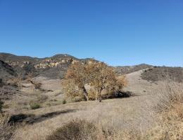 Upper Black Star Canyon, Orange County, CA