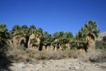 1:50 - Hidden Palms Oasis