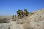 1:15  - Take a sharp right and head toward the Horseshoe Pines