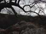 0:40 - Vista point at the junction of the Cougar Ridge and Engelmann Oak Trails