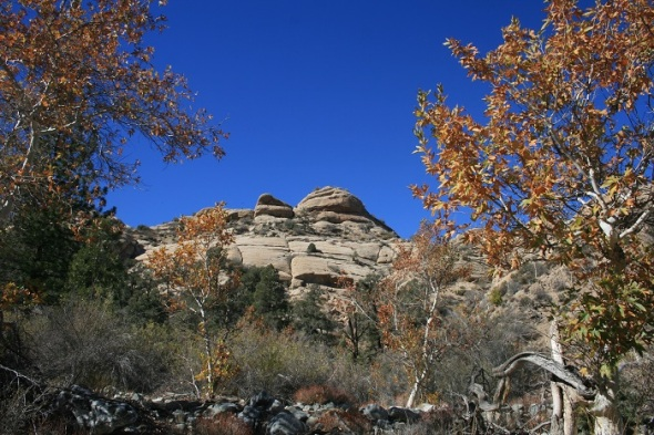 Geology and foliage, Holcomb Canyon