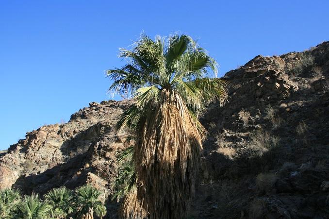 Palm tree at Jane's Hoffbrau Oasis