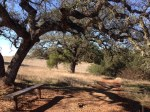 1:00 - Bench beneath an oak at the beginning of the Trans Preserve Trail