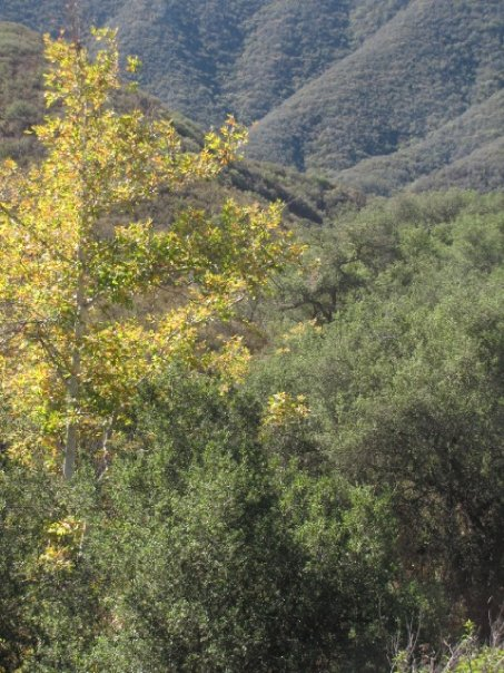 Fall colors in San Mateo Canyon