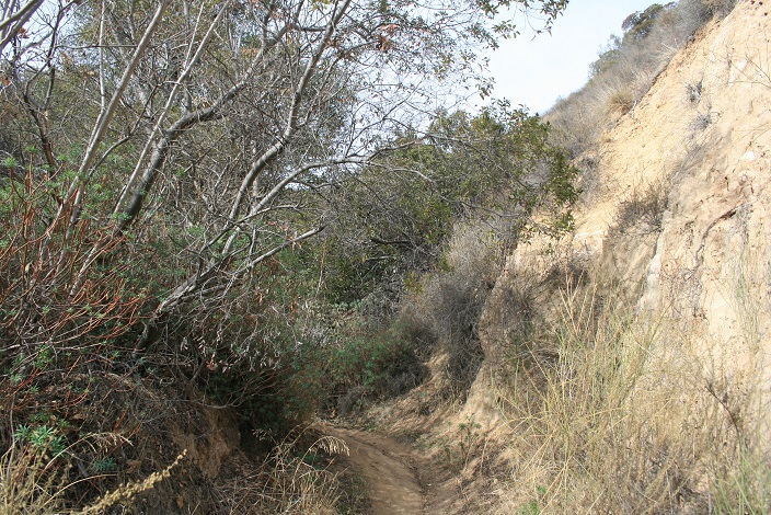 Hugging the hill side on the Altadena Crest Trail