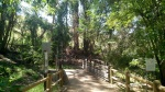 Bobcat Trail, Schabarum Park