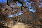 0:51 - Live oak shortly past the picnic area