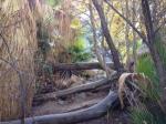 1:25 - Fallen palms in the third grove before Maidenhair Falls