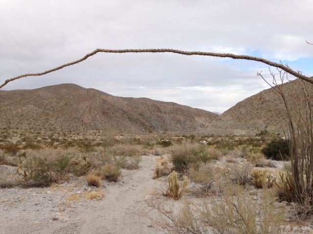 "Ocotillo ""arch"" on the Narrows Earth Trail"