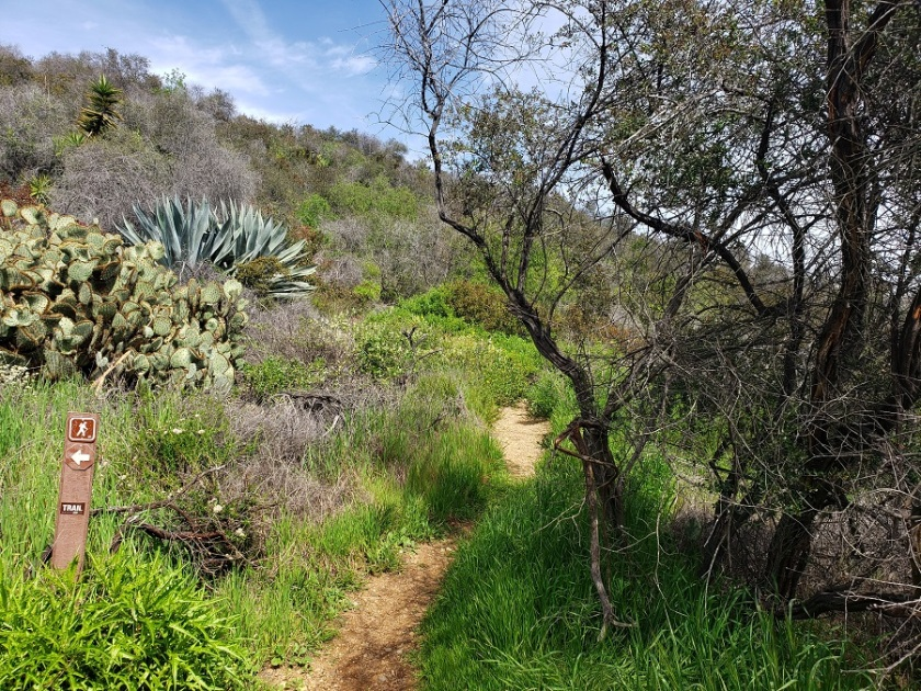 Trail to Goat Peak, Santa Monica Mountains