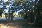 0:00 - Oaks near the parking area by the trail head (click thumbnails to see the full sized versions)