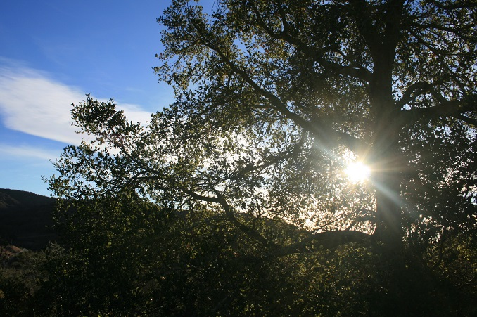 Sunlight in the trees, Toro Canyon Park