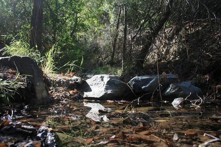 Stream in Tin Mine Canyon