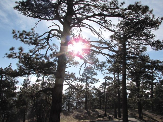 Sun through the pines, Table Mountain Nature Trail