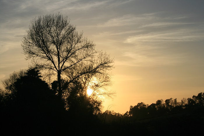 Sunset, Guajome Regional Park