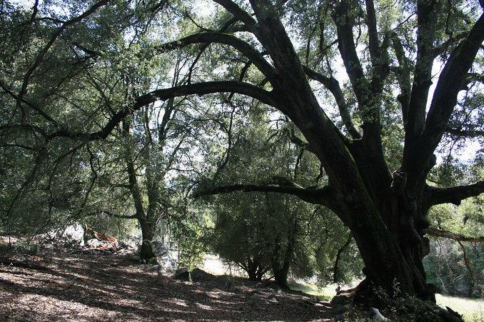 Oak woodlands on the Lower French Valley Trail