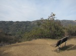 0:16 - Bench overlooking Topanga Canyon