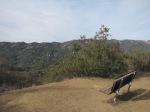 0:16 - Bench overlooking Topanga Canyon
