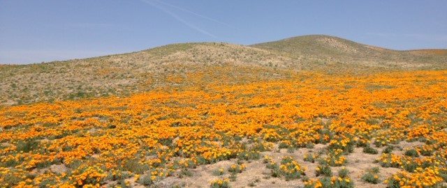 Antelope Valley California Poppy Reserve, Antelope Trail