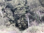 0:00 - Trailhead on Trabuco Creek Road (click thumbnails to see the full sized versions)