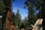 1:00 - View through some fallen trees