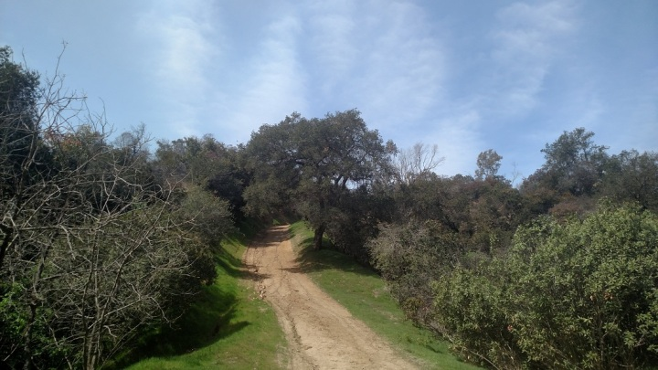 Condor Trail, Griffith Park, CA