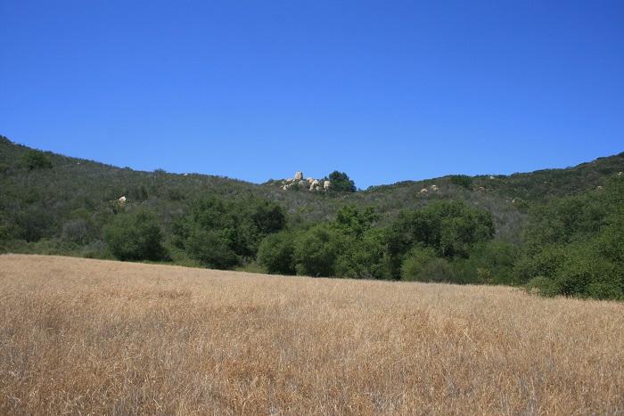 Jack Creek Meadow
