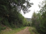 0:50 - Woodlands on the Bulldog Motorway descent
