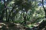 0:39 - Oak Spring Trail Camp