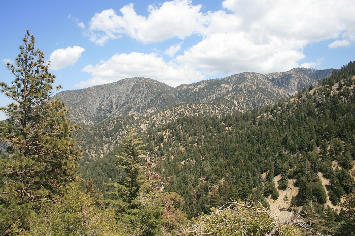 View from near the top of the South Fork Trail
