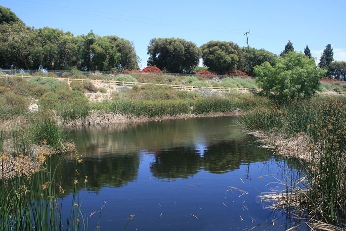 Wetlands in the south end of the park