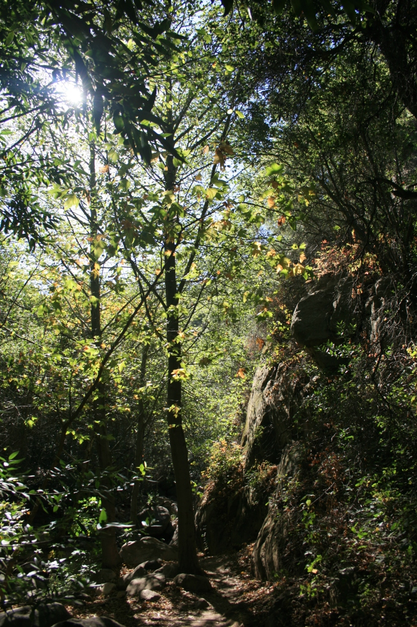 Greenery in lower Rattlesnake Canyon